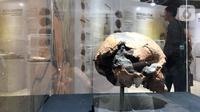 Sebuah tengkorak manusia purba pada pameran Asal Usul Orang Indonesia (ASOI) di Museum Nasional Jakarta, Minggu (3/11/2019). Pameran tersebut menampilkan fase perkembangan manusia Homo Erectus Tipik, Homo Erectus Progresif dan Homo Sapiens. (Liputan6.com/Fery Pradolo)