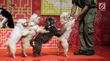 """Sejumlah anjing melakukan atraksi saat pembukaan event Imlek """"Lucky New Year, Lucky You"""" di salah satu pusat perbelanjaan di Jakarta, Jumat (2/2). Pertunjukkan ini untuk menyambut Tahun Baru Imlek 2569. (Liputan6.com/Arya Manggala)"""