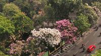 Pohon Tabebuya di Surabaya, Jawa Timur (Foto:Instagram @Surabaya)