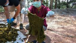 Gambar yang diambil pada 25 November 2019, dokter hewan memeriksa sampah yang ditemukan dari perut rusa mati di Taman Nasional Khun Sathan, Thailand. Rusa liar berumur 10 tahun itu ditemukan mati setelah menelan 7 kilogram kantong plastik dan sampah lain. (HO/Office of Protected Area Region 13/AFP)