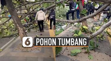 Sebuah pooh tumbang di Semanggi Kolong arah Bundaran Senayan, Jakarta dan menimpa satu pengendara motor.