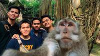 Monyet ajak selfie (Sumber: Twitter/giewahyudi)