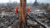 Petugas pemadam kebakaran berusaha mematikan sisa titik api yang masih menyala di cagar alam biosfer Giam Siak Kecil di Riau (3/9/2015). Sebagian lahan hutan yang memiliki luas ratusan ribu hektar itu terlihat hangus. (AFP PHOTO/ALFACHROZIE)