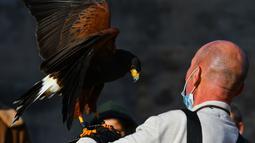 Pawang beserta burung elang harris peliharaannya berpartisipasi dalam acara demonstrasi berburu menggunakan burung elang di Wied iz-Zurrieq, Malta, 22 November 2020. Acara ini dicetuskan oleh International Association for Falconry dan Conservation of Birds of Prey. (Xinhua/Jonathan Borg)