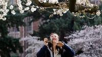 Wisatawan mengambil gambar bunga sakura yang bermekaran pada hari pertama musim semi di kampus Universitas Washington, Seattle, Selasa (20/3). Pohon-pohon sakura tersebut merupakan hadiah dari Jepang lebih dari seabad yang lalu. (AP/Elaine Thompson)