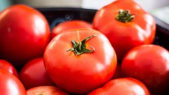 Pertama di Dunia, Jepang Mulai Menjual Tomat Genom yang Diedit
