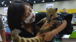 Seorang wanita menggendong seekor coati dalam Pameran Hewan Peliharaan Thailand 2020 di Bangkok International Trade and Exhibition Center (BITEC), Bangkok, Thailand, 3 September 2020. Ajang yang digelar selama empat hari itu akan berlangsung hingga 6 September. (Xinhua/Rachen Sageamsak)