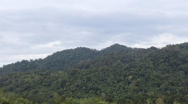 Hutan Adat Guguk