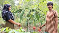 Para petani Mitra Binaan Perta Arun Gas panen buah naga.