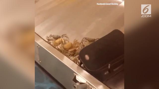Penumpang menjadi takut digigit saat akan mengambil barang di bagasi.