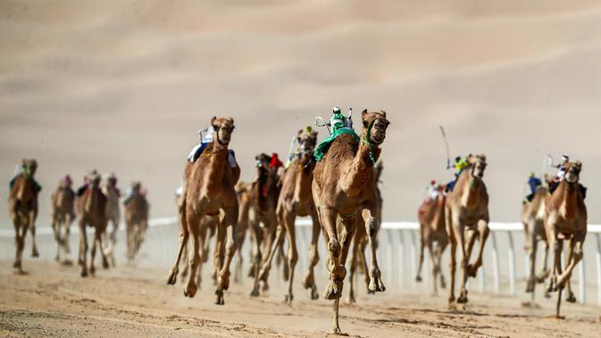 Sejumlah robot joki memacu unta selama Festival Moreeb Dune 2019 di gurun Liwa, Abu Dhabi, Selasa (1/1). Festival yang diikuti peserta dari seluruh wilayah Teluk ini bertujuan untuk mempromosikan cerita rakyat negara tersebut.  (KARIM SAHIB / AFP)