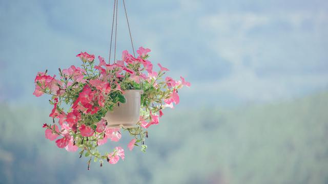 Cara Membuat Pot Bunga Dari Botol Bekas Yang Digantung Unik Hot Liputan6 Com