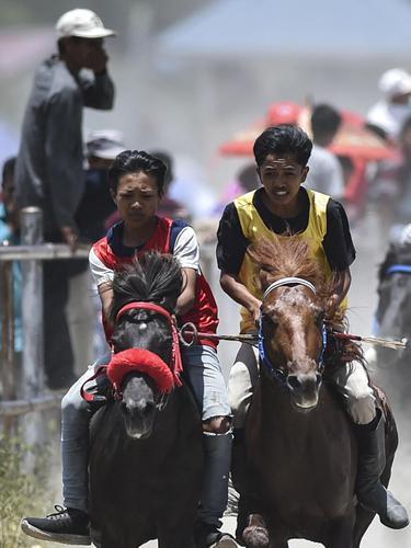 Tradisi pacuan kuda
