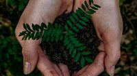 Ilustrasi menanam bibit baru agar alam lestari (dok. unsplash/noah buscher)