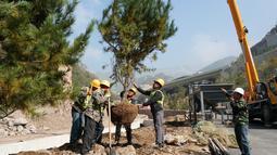 Para pekerja sedang menanam pohon untuk gelaran Olimpiade Musim Dingin Beijing 2022 di Distrik Yanqing, Beijing, ibu kota China (28/9/2020). (Xinhua/Zhang Chenlin)