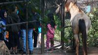 Pengunjung sedang memperhatikan satwa yang dipelihara di Kebun Binatang Bandung. (Liputan6.com/Huyogo Simbolon)
