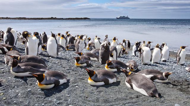 Sepasang Penguin Mencuri Telur di Kebun Binatang