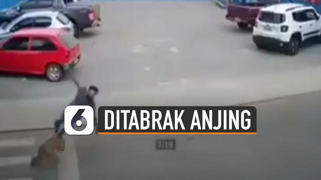 Terekam kamera cctv seorang pria menyeberang jalan ditabrak anjing.