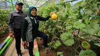 Pemkot Surabaya membuat mini agrowisata di area kantor Dinas Ketahanan Pangan dan Pertanian (DKPP) Kota Surabaya. (Foto: Liputan6.com/Dian Kurniawan)