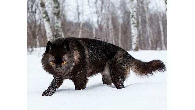 Beberapa Fakta Tentang Kucing Hitam Yang Katanya Pembawa Sial