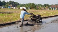 Total luas sawah Kabupaten Lampung Selatan yang bakal masuk LP2B geospasial seluas 36.052 hektar dari luas lahan sawah Lampung Selatan 45.575 hektar.