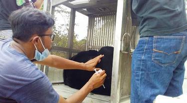 Petugas medis dari BBKSDA Riau mengobati beruang terjerat di Kabupaten Indragiri Hulu.