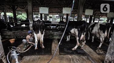 Geliat Industri Susu Sapi Perah di Masa Pandemi COVID-19