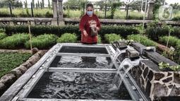 Warga memberi pakan kepada ikan di kolam buatan di kolong flyover Cipinang, Jakarta, Senin (1/2/2021). Atas inisiasi PPSU Kelurahan Cipinang dibantu warga setempat, lahan kosong di bawah flyover tersebut disulap menjadi ruang terbuka hijau dan area interaksi warga. (merdeka.com/Iqbal S. Nugroho)