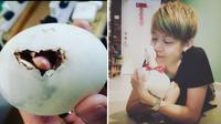 Lim menetaskan telur tersebut dengan inkubator (sumber: instagram/daily_daisy_duck)
