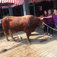 Potret Ayu Ting Ting dan keluarga bersama hewan kurban. (Ruswanto/Bintang.com)