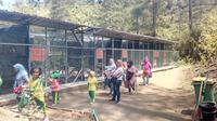 Para pengunjung kawasan konservasi PKEK Kamojang, nampak tengah menikmati ragam elang untuk pengunjung (Liputan6.com/Jayadi Supriadin)