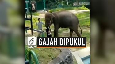 Dinas Pariwisata, Pemuda dan Olahraga (Disparpora) Kota Bukittinggi, Sumatera Barat, angkat bicara dan meminta maaf pada publik. Ini terkait viralnya video pemukulan seekor gajah yang dilakukan pawang di Kebun Binatang Bukittinggi.