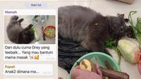 Potret Kucing 'Bantuin Masak' Di Dapur, Aksinya Bikin Gemas. (Sumber: Twitter/ZOO_FESS)