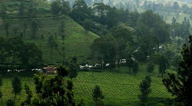 Potret Jejak Purba Manusia Sumatera