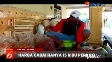 Petani cabai di Gresik, Jawa Timur, mulai memasuki masa panen cabai merah. Namun, hasil panen tersebut tidak sesuai dengan harga penjualan.