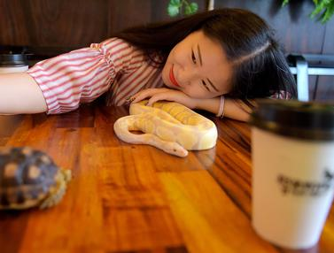 Ada Kafe Reptil di Kamboja