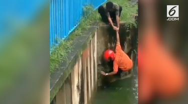 Dua pemuda tak berpikir dua kali saat selamatkan kucing tenggelam. Mereka rela menolong dengan risiko jatuh ke sungai.