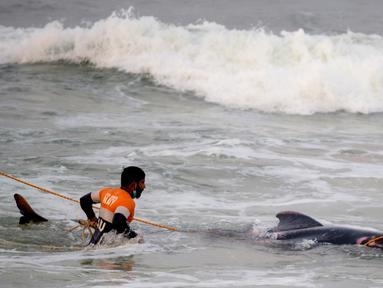Tentara Angkatan Laut Sri Lanka mencoba mendorong kembali paus pilot yang terdampar ke perairan dalam di Panadura, 3 November 2020. Tim penyelamat dan sukarelawan sejak 2 November berlomba menyelamatkan sekitar 100 paus pilot yang terdampar di pantai barat Sri Lanka. (Lakruwan WANNIARACHCHI/AFP)