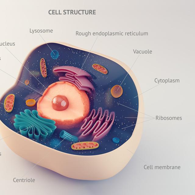 Fungsi Nukleus Dan Bagian Bagiannya Yang Perlu Kamu Ketahui Health Liputan6 Com