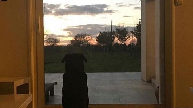 Anjing milik Emiliano Sala menunggu di depan rumah Sala. (Facebook Romina Sala)
