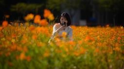 Seorang perempuan berpose di antara hamparan bunga cosmos yang tumbuh di area parkir mobil di Goyang, sebelah barat Seoul pada 22 September 2020. (Photo by Ed JONES / AFP)