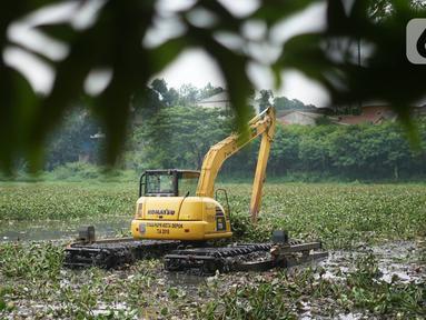 Petugas menggunakan alat berat untuk mengeruk eceng gondok yang memenuhi permukaan Setu Pengarengan, Depok, Jawa Barat, Senin (16/12/2019). Pengerukan dilakukan untuk membersihkan Setu Pengarengan dari eceng gondok yang tumbuh selama kurang lebih satu tahun terakhir. (Liputan6.com/Immanuel Antonius)