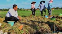 Mentan Amran Sulaiman berdialog dengan petani bawang di Desa Cigentong, Kecamatan Wanasari, Kabupaten Brebes.