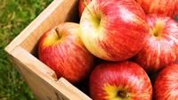 Ilustrasi buah apel (iStock)