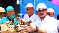 Menteri Pertanian RI Syahrul Yasin Limpo (SYL) mendorong Pemerintah Daerah (Pemda) Makassar, Provinsi Sulawesi Selatan untuk mengembangkan pembibitan ayam kampung dan menghasilkan bibit ayam/day old chicken (DOC).