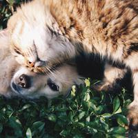 Ilustrasi anjing dan kucing peliharaan. (dok. pexels.com/Asnida Riani)