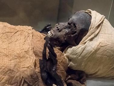 FOTO: Penampakan Mumi Firaun Seqenenre Taa II Berusia 3.600 Tahun