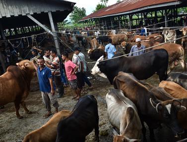 Potret Pasar Hewan Ternak di Aceh Jelang Lebaran