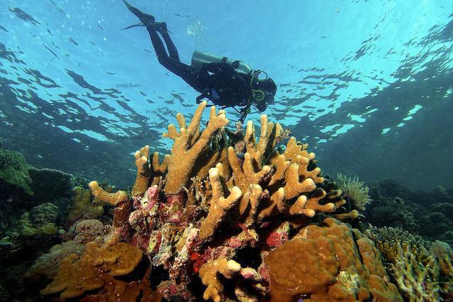 Taka Bonerate jadi bukti kalau taman laut cantik di Sulawesi tak hanya Wakatobi.