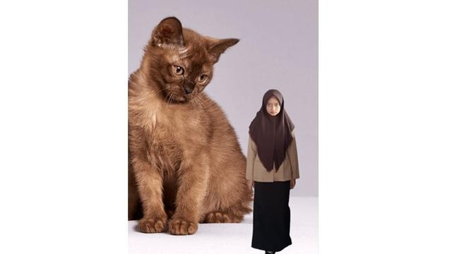 Gambar Kucing Estetik godean.web.id